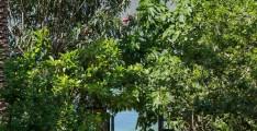 Вилла в п. Люта на 1-ой линии