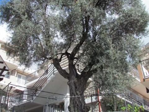 Апартаменты в п.Святой Стефан