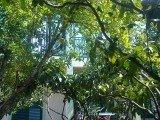 Дом с цитрусовым садом